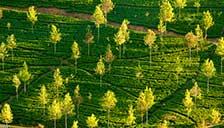 Ceylon | Sri Lanka